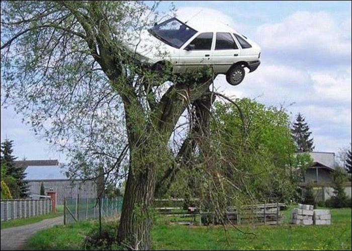 Homem encontra seu carro na copa da árvore ao acordar