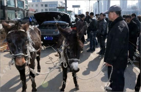 Homem usa burros para rebocar um SUV de luxo com defeito