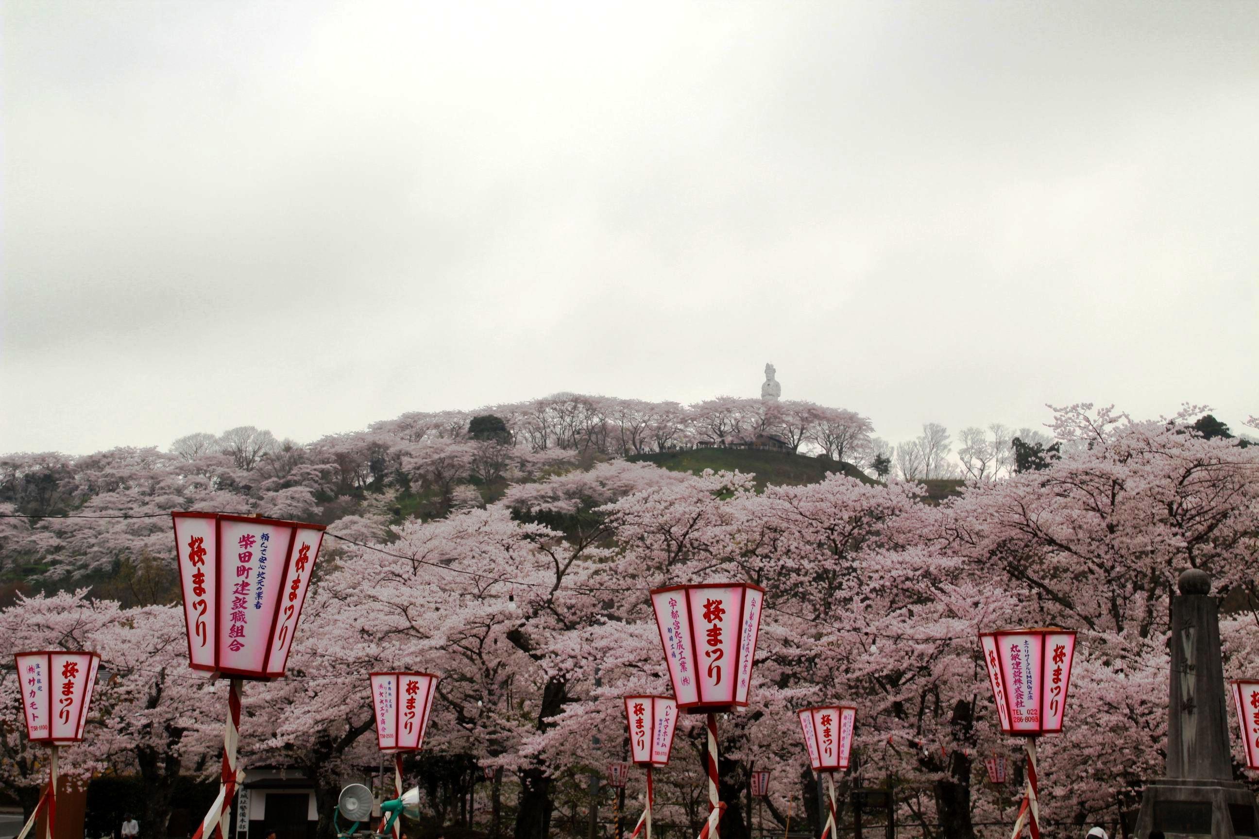 As cerejeiras em flor dão as boas vindas à primavera na China com um dos maiores espetáculos naturais da Terra 08