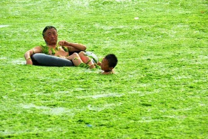 Praia chinesa invadida por algas 07