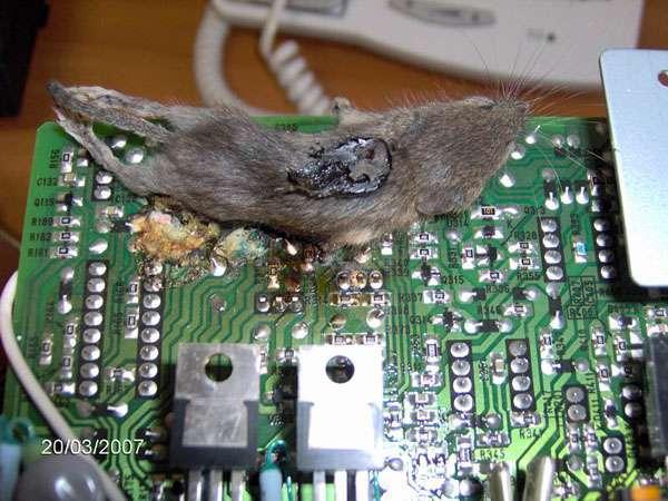 Mouse não encontrado