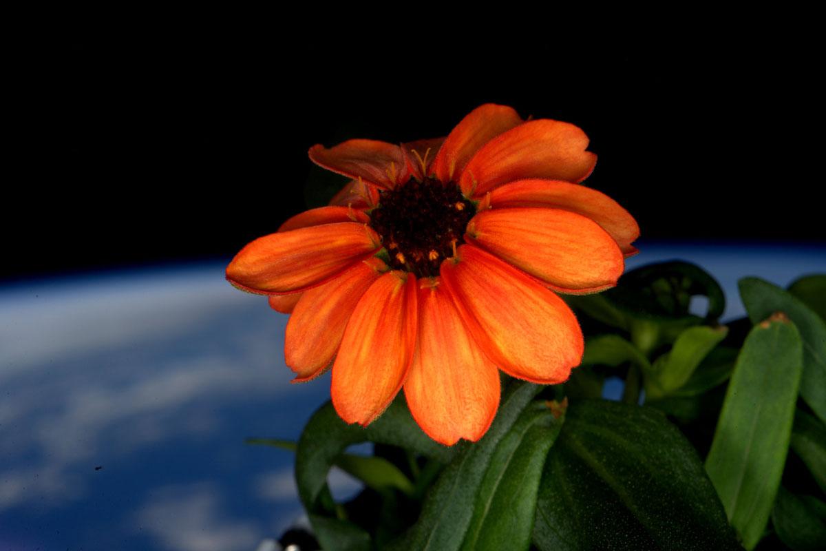 A NASA compartilha as 45 melhores fotos do astronauta Scott Kelly 10