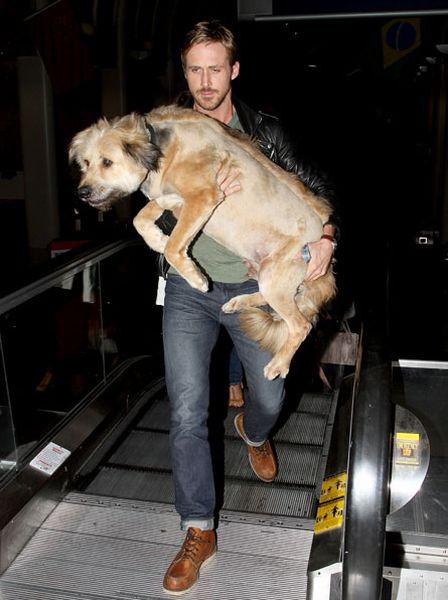Famosos e seus cãezinhos de estimação