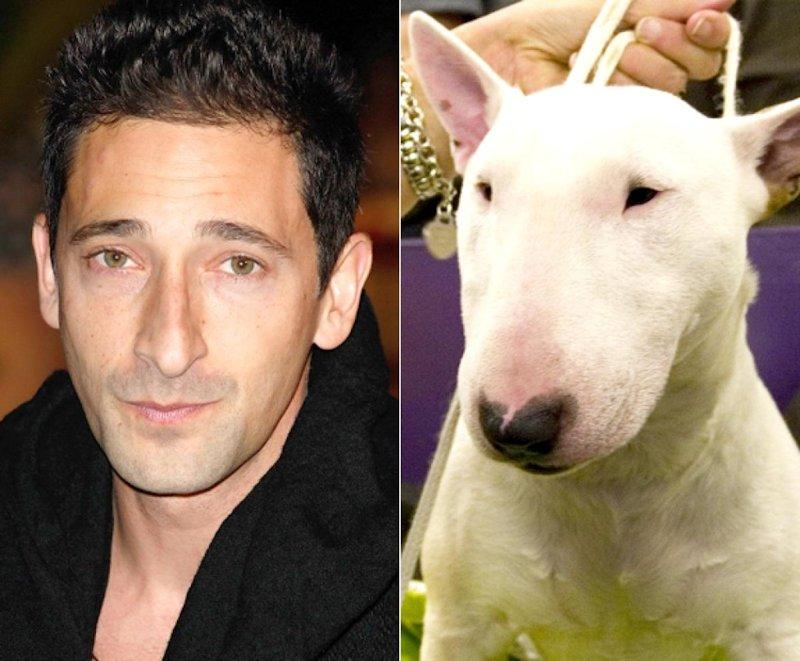 30 celebridades com seus doppelgangers animais 25