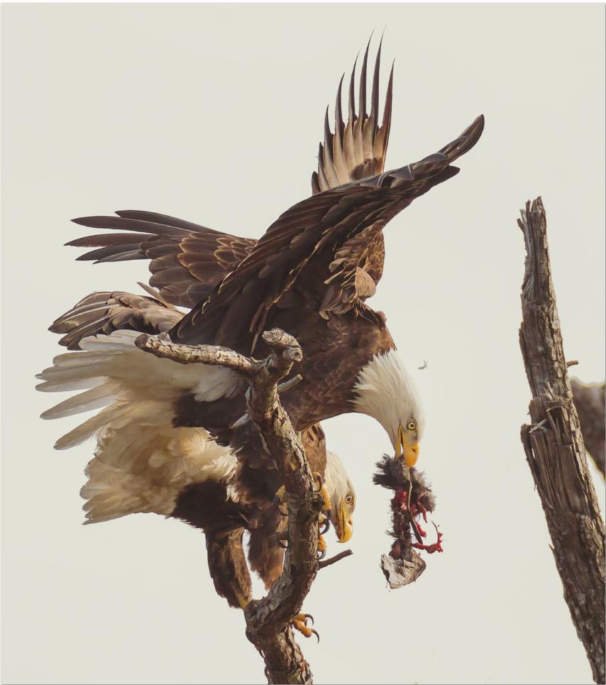 10º Concurso de Fotografias da Revista Smithsonian 10