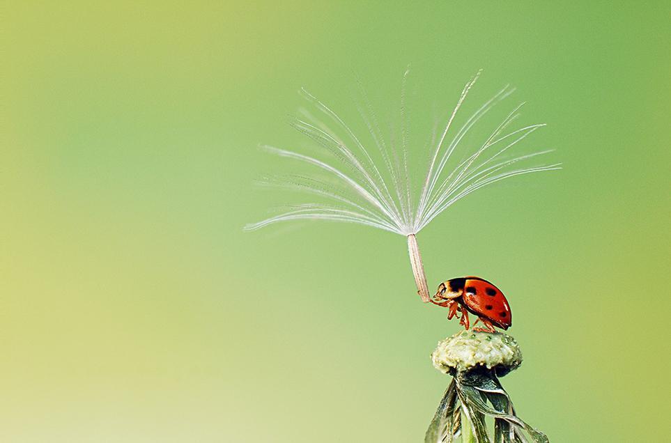 10º Concurso de Fotografias da Revista Smithsonian 45
