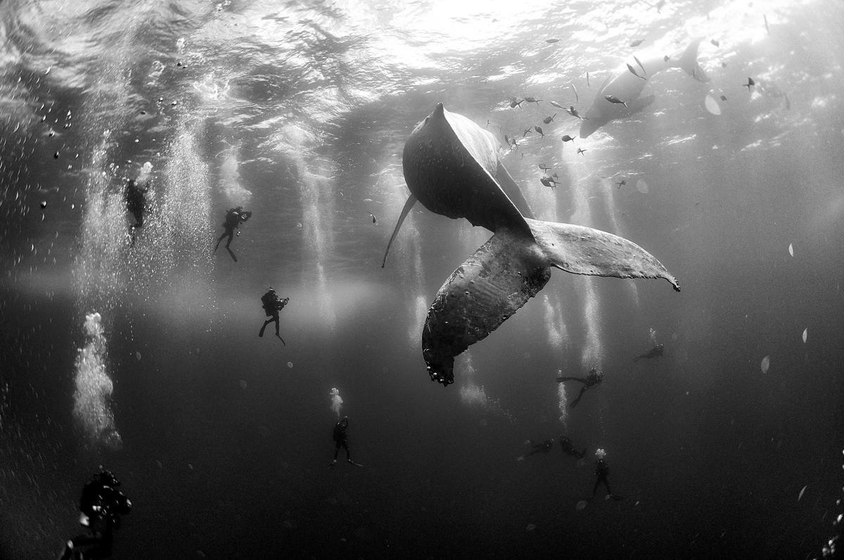 As 45 melhores imagens do World Press Photo 2016
