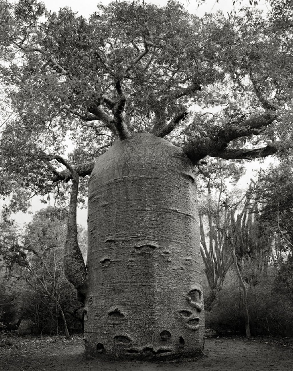 Fotógrafa passa 14 anos viajando por todo mundo em busca das árvores mais antigas e estranhas 09