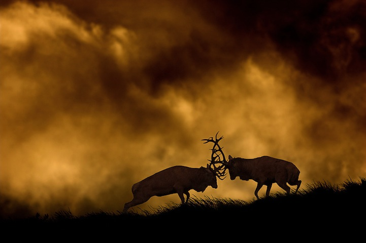 Fotos espetaculares da vida selvagem em deamáticas paisagens 01