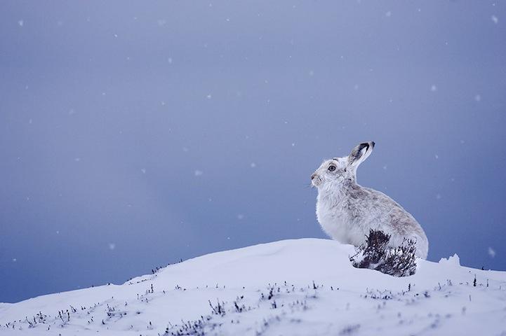 Fotos espetaculares da vida selvagem em deamáticas paisagens 03