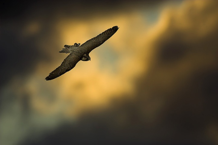 Fotos espetaculares da vida selvagem em deamáticas paisagens 06