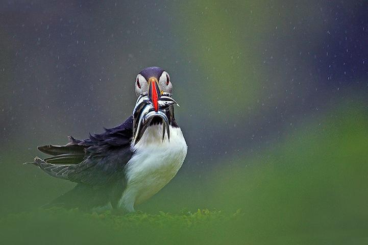 Fotos espetaculares da vida selvagem em deamáticas paisagens 08