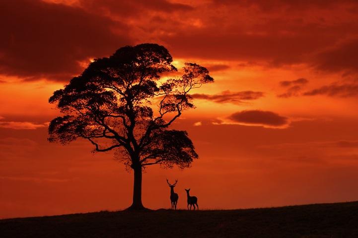 Fotos espetaculares da vida selvagem em deamáticas paisagens 09