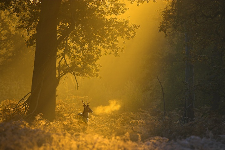 Fotos espetaculares da vida selvagem em deamáticas paisagens 10