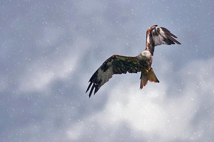 Fotos espetaculares da vida selvagem em deamáticas paisagens 12