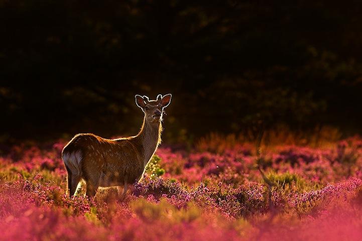 Fotos espetaculares da vida selvagem em deamáticas paisagens 13