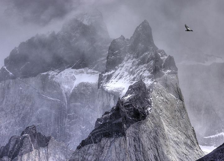 Fotos espetaculares da vida selvagem em deamáticas paisagens 14