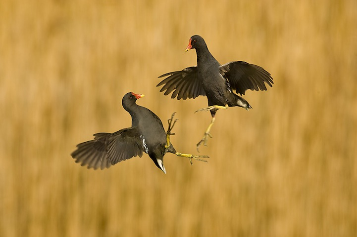 Fotos espetaculares da vida selvagem em deamáticas paisagens 15