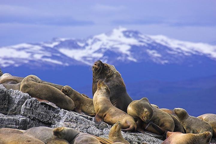 Fotos espetaculares da vida selvagem em deamáticas paisagens 16