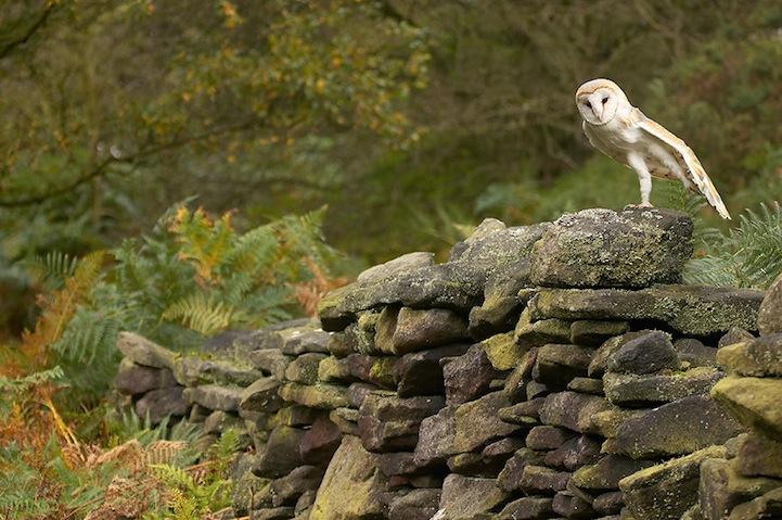 Fotos espetaculares da vida selvagem em deamáticas paisagens 19