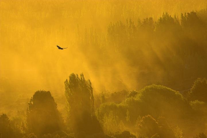 Fotos espetaculares da vida selvagem em deamáticas paisagens 20