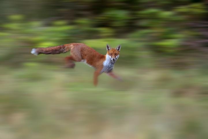 Fotos espetaculares da vida selvagem em deamáticas paisagens 21