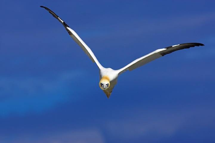 Fotos espetaculares da vida selvagem em deamáticas paisagens 22