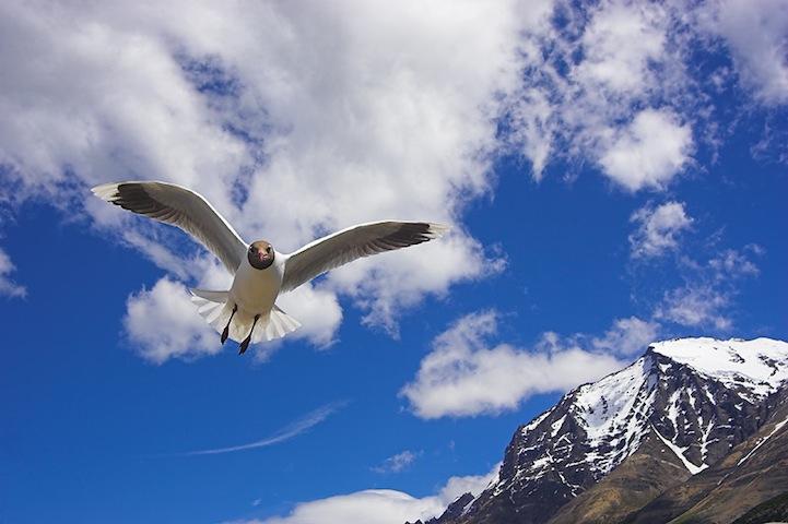 Fotos espetaculares da vida selvagem em deamáticas paisagens 25