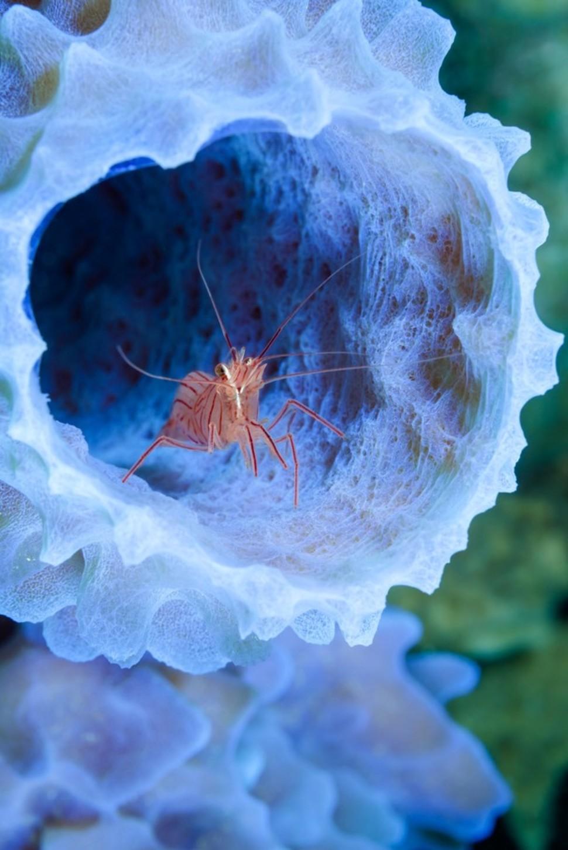 Candidatas a melhores fotografias da National Geographic durante 2014 06