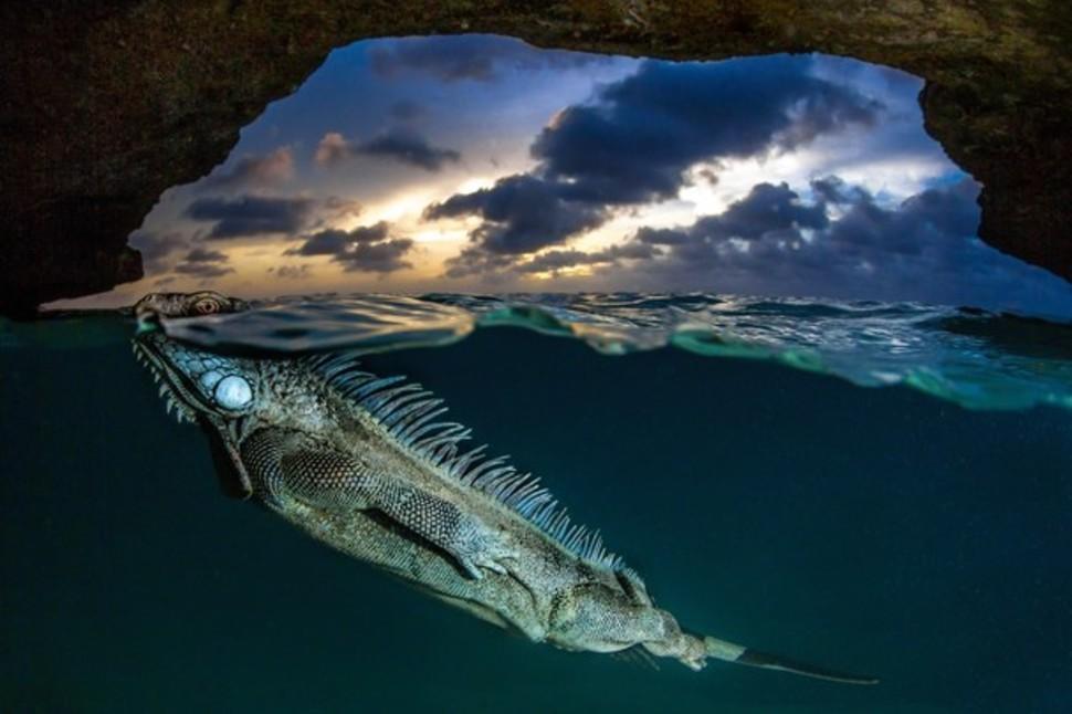 Candidatas a melhores fotografias da National Geographic durante 2014 10
