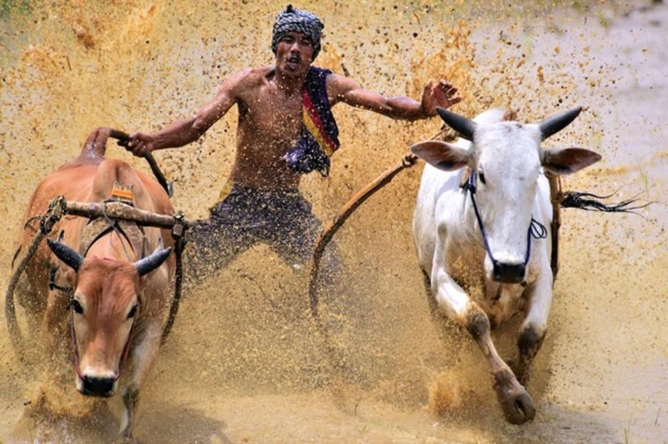 Candidatas a melhores fotografias da National Geographic durante 2014 17
