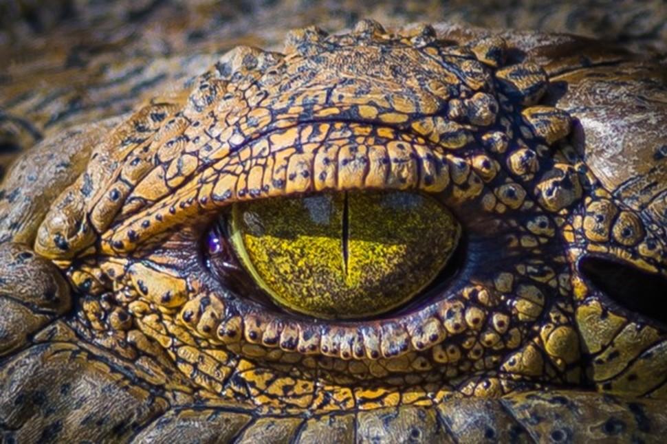 Candidatas a melhores fotografias da National Geographic durante 2014 25