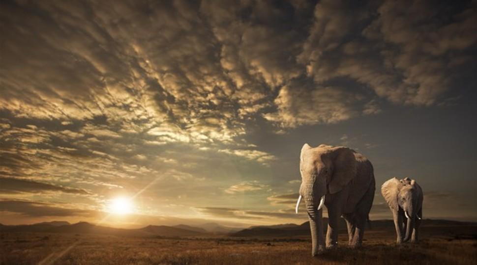 Candidatas a melhores fotografias da National Geographic durante 2014 27