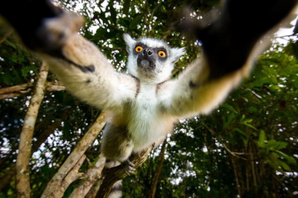 Candidatas a melhores fotografias da National Geographic durante 2014 28