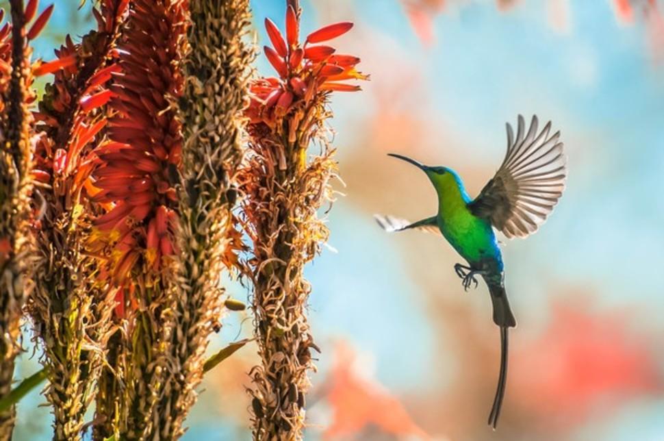 Candidatas a melhores fotografias da National Geographic durante 2014 38
