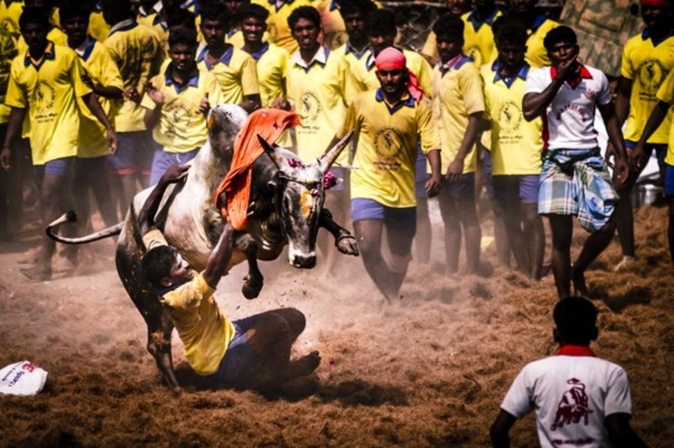 Candidatas a melhores fotografias da National Geographic durante 2014 44