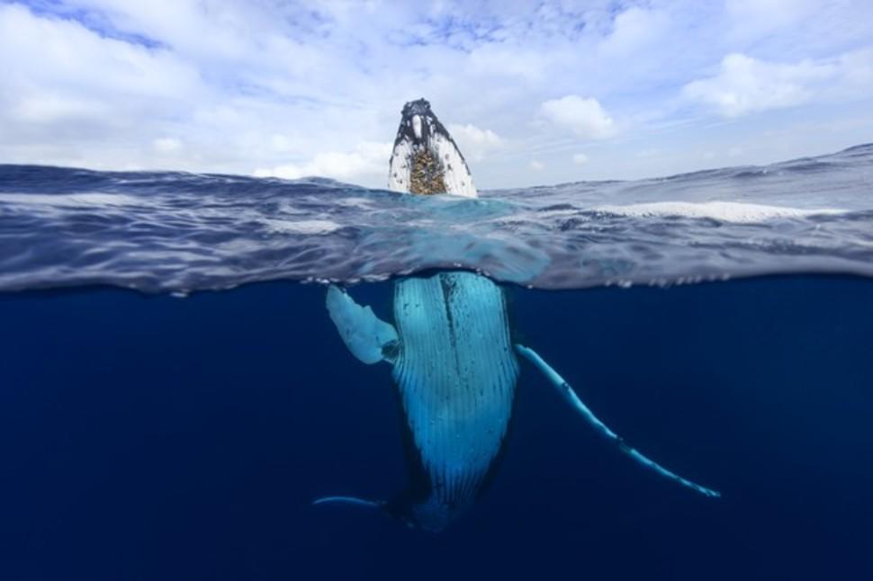 Candidatas a melhores fotografias da National Geographic durante 2014 58