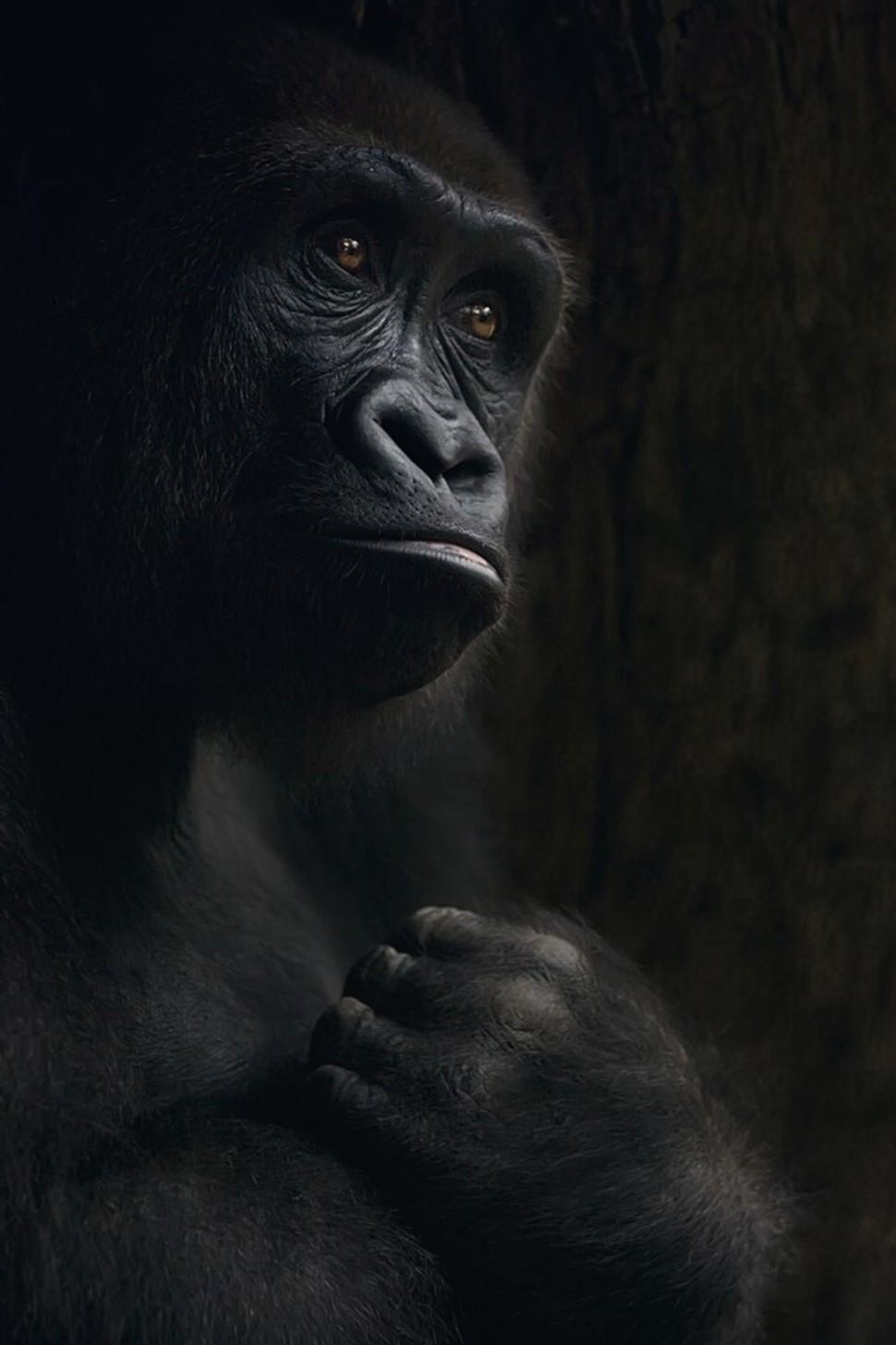Candidatas a melhores fotografias da National Geographic durante 2014 59