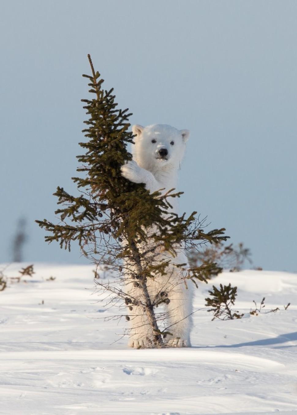 Candidatas a melhores fotografias da National Geographic durante 2014 63