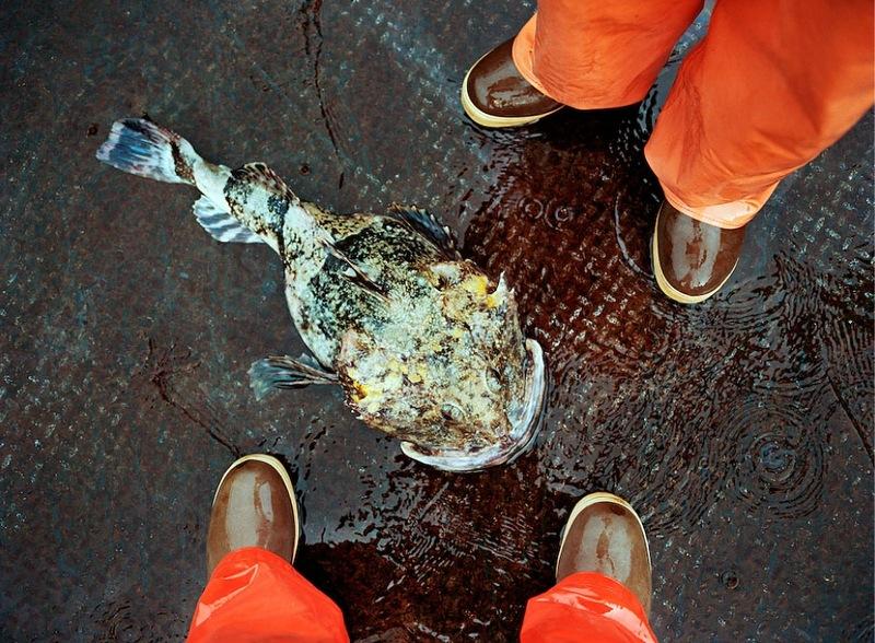 A perigosa aventura da pesca em alto-mar 15