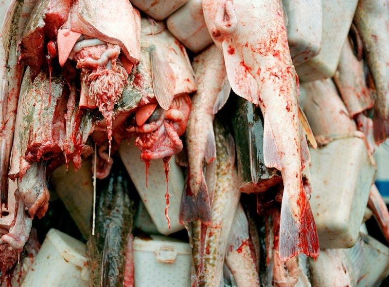 A perigosa aventura da pesca em alto-mar 16