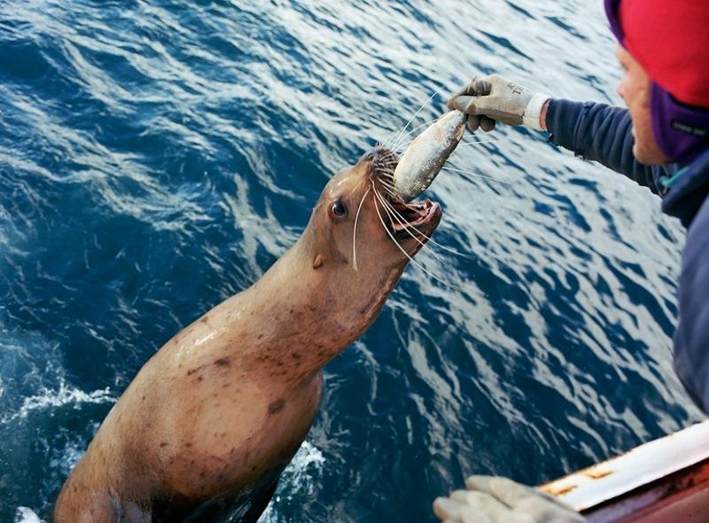 A perigosa aventura da pesca em alto-mar 31