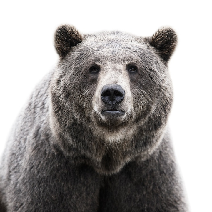 Retratos animais de Morten Koldby 01
