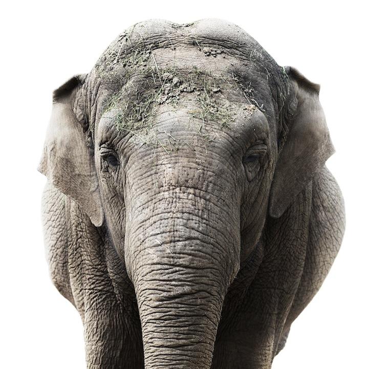 Retratos animais de Morten Koldby 02