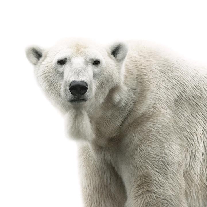 Retratos animais de Morten Koldby 03