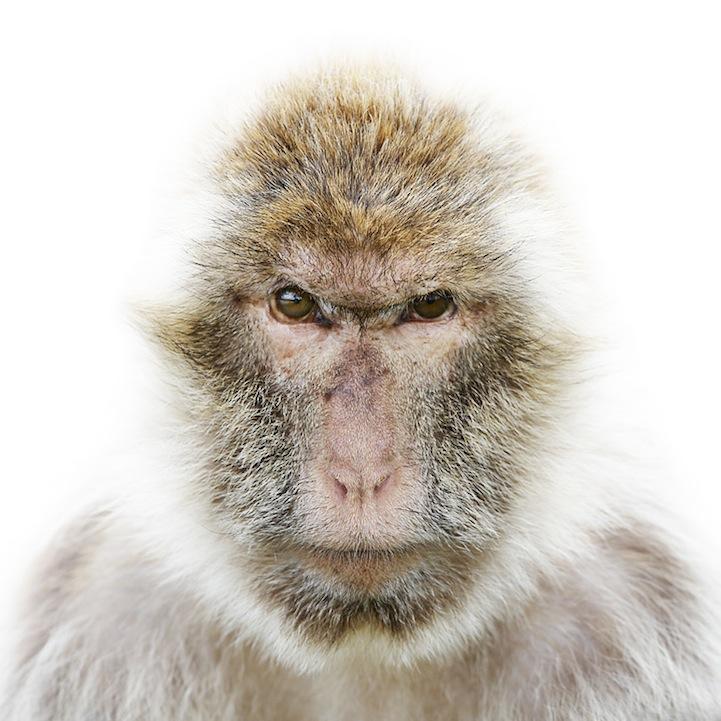 Retratos animais de Morten Koldby 07