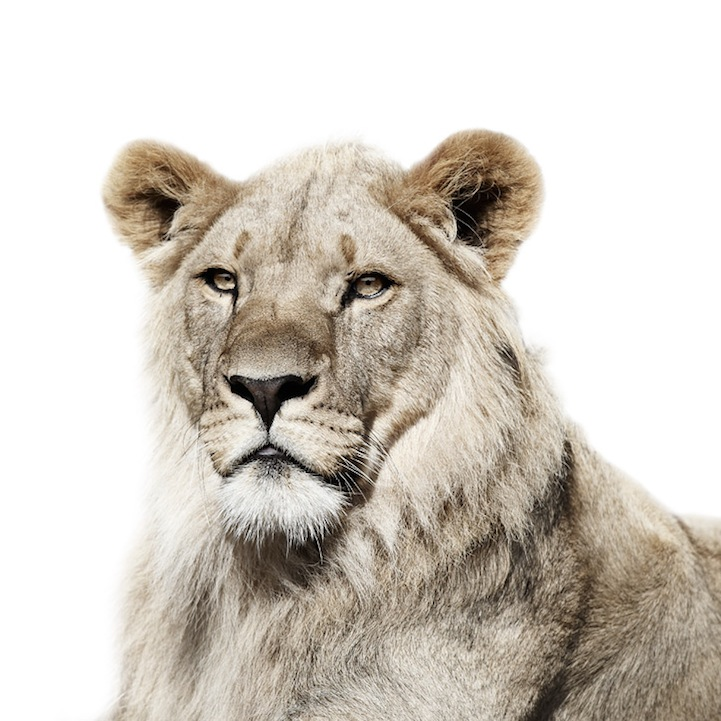 Retratos animais de Morten Koldby 08