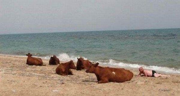 Um passeio dominical em uma praia russa 02