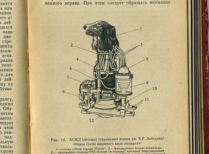 Collie, o ciborgue russo com cabeça de cão 02
