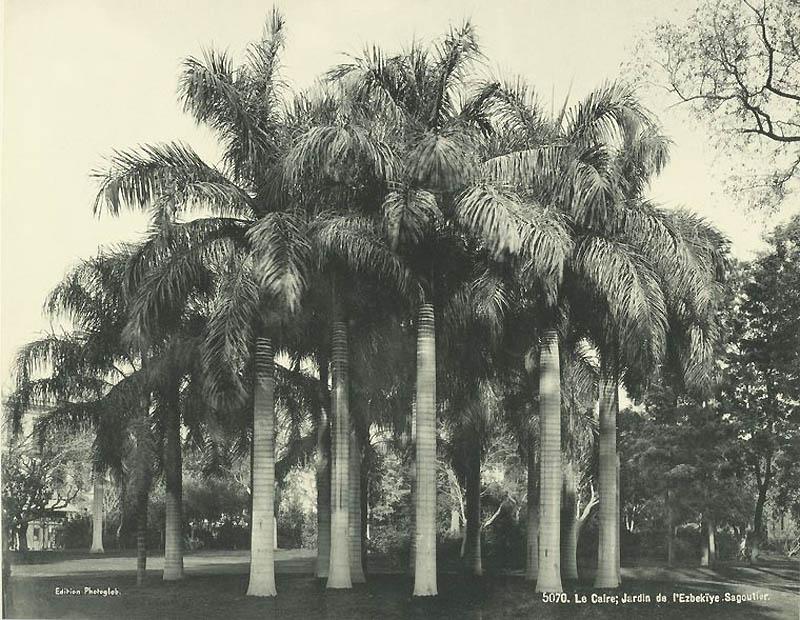 Incr�veis fotos do Egito de 1870 29